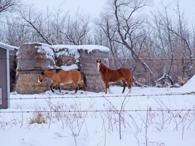 Prairie Moments