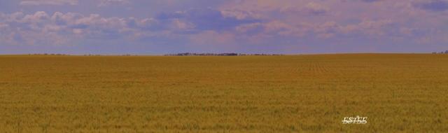 A prairie moment..
