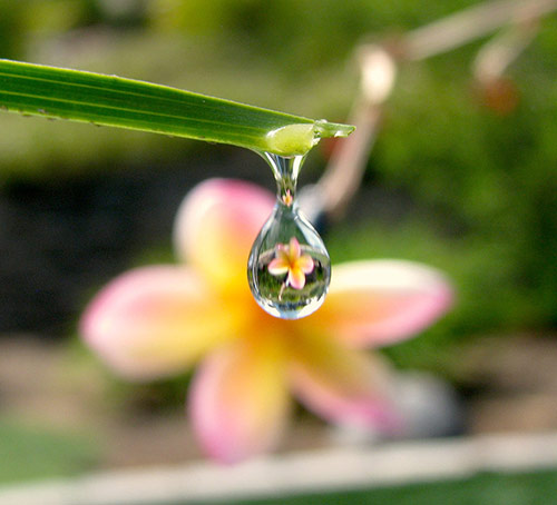 18-flower-drop-reflection