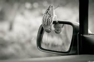 lookinginto the mirror