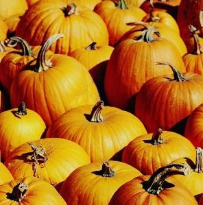 pumpkins2 - Copy