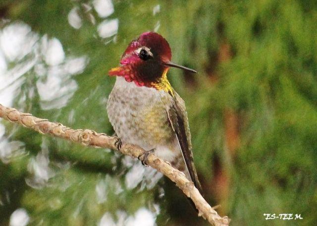 hummingbrid5