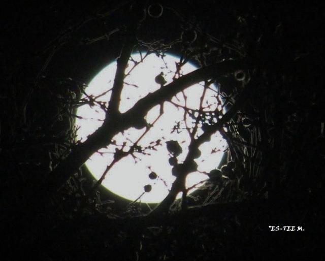 moonthrutrees