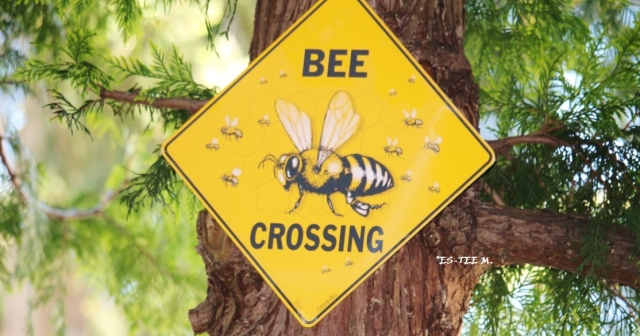 bee crossing - Copy