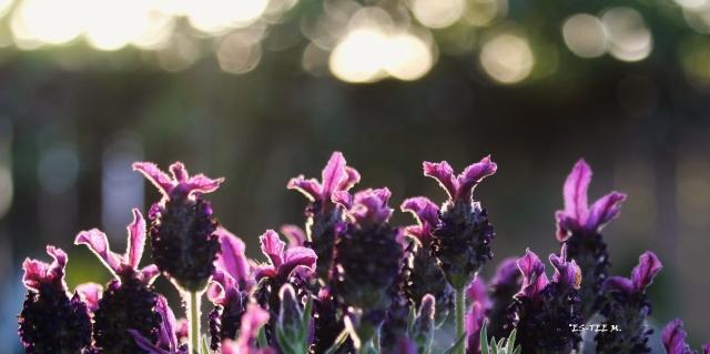 In the lavender zone - Copy (2)