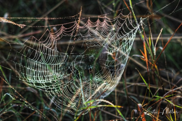 A beautiful web-1