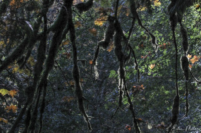under the forest canopy-1