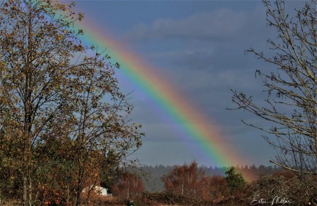 rainbows-1