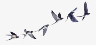 871-8710809_flight-flock-of-birds-swallow-bird-barn-clipart