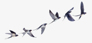 871-8710809_flight-flock-of-birds-swallow-bird-barn-clipart